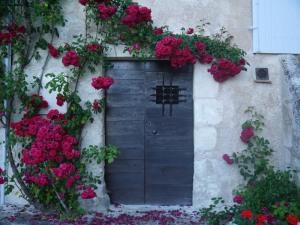 roses in aubeterre